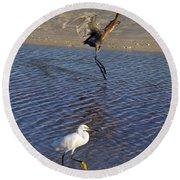Two Strutting Egrets Round Beach Towel