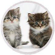 Two Tabby Kittens Round Beach Towel