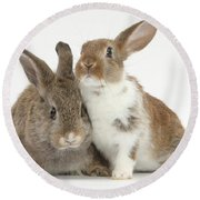 Two Young Rabbits Round Beach Towel
