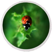 Ultra Electro Magnetic Single Ladybug Round Beach Towel
