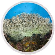 Underside Of A Table Coral, Papua New Round Beach Towel