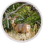 Utah Mule Deer Round Beach Towel