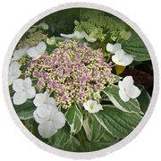 Variegated Lace Cap Hydrangea - Pink And White Round Beach Towel