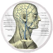 Veins Of The Head And Neck Round Beach Towel