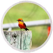 Vermilion Flycatcher Round Beach Towel