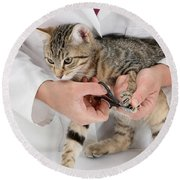 Vet Clipping Kittens Claws Round Beach Towel