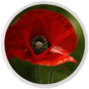 Vibrant Red Oriental Poppy Wildflower Round Beach Towel