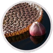 Victoria Amazonica Giant Water Lily Round Beach Towel