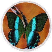 Violin With Green Black Butterfly Round Beach Towel