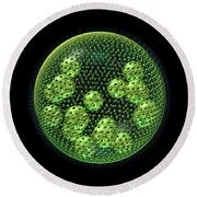 Volvox Round Beach Towel by Russell Kightley
