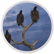 Vultures Perched On A Branch No.0022 Round Beach Towel