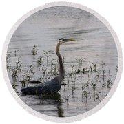Wading Blue Heron - Ardea Herodias Round Beach Towel