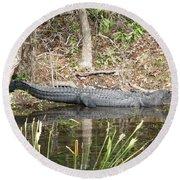 Wakulla Springs Alligator Round Beach Towel