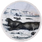 Walruses On Ice Field Round Beach Towel
