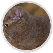Warm Kitty  Round Beach Towel