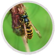 Wasp On Plant Round Beach Towel