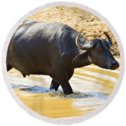 Water Buffalo Round Beach Towel