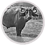 Water Buffalo In Black And White Round Beach Towel