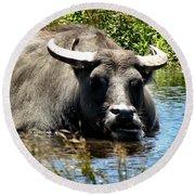 Water Buffalo Round Beach Towel