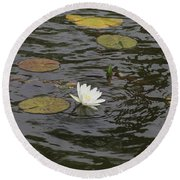 Water Circles On The Lily Pond Round Beach Towel