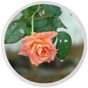Water Dripping From A Peach Rose After Rain Round Beach Towel