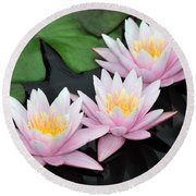 water lily 88 Sunny Pink Water Lily with Reflection Round Beach Towel
