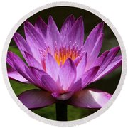 Water Lily Blossom Round Beach Towel