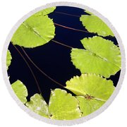 Water Lily Pads And Bloom Round Beach Towel