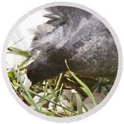 Waterhen Coot On Nest With Eggs Round Beach Towel