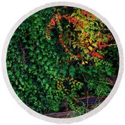 Watershed Park Foliage Round Beach Towel