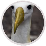 Waved Albatross Portrait Round Beach Towel