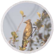 Wax Wing In Sunshine  Round Beach Towel