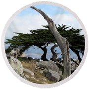 Weathered Tree On California Coast Round Beach Towel