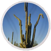Weird Giant Saguaro Cactus With Blue Sky Round Beach Towel