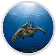 West Maui Sea Turtle Round Beach Towel