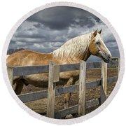 Western Palomino Horse In Alberta Canada No.1335 Round Beach Towel