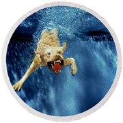 Wet Paws Round Beach Towel by Jill Reger