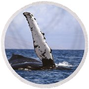 Whale Fin Above Water Round Beach Towel