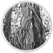 What Trees Know Round Beach Towel by Betsy Knapp