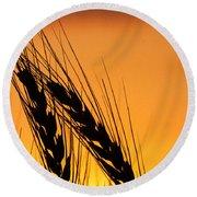 Wheat At Sunset Round Beach Towel