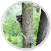 When Raccoon Dream Round Beach Towel