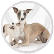 Whippet And Siamese Kitten Round Beach Towel