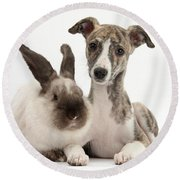 Whippet Pup With Colorpoint Rabbit Round Beach Towel