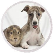 Whippet Pup With Guinea Pig Round Beach Towel