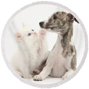 Whippet Puppy And Kitten Round Beach Towel