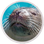Whiskers Of A Seal Round Beach Towel