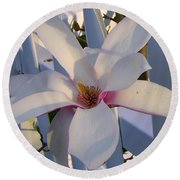 White And Pink Magnolia Round Beach Towel