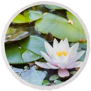 White And Pink Water Lily Round Beach Towel