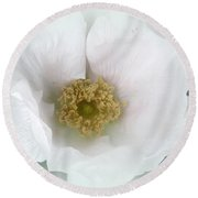 White Beach Rose - Rosa Rugosa Round Beach Towel