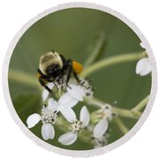 White Crownbeard Wildflowers Pollinated By A Bumble Bee With His Bags Packed Round Beach Towel